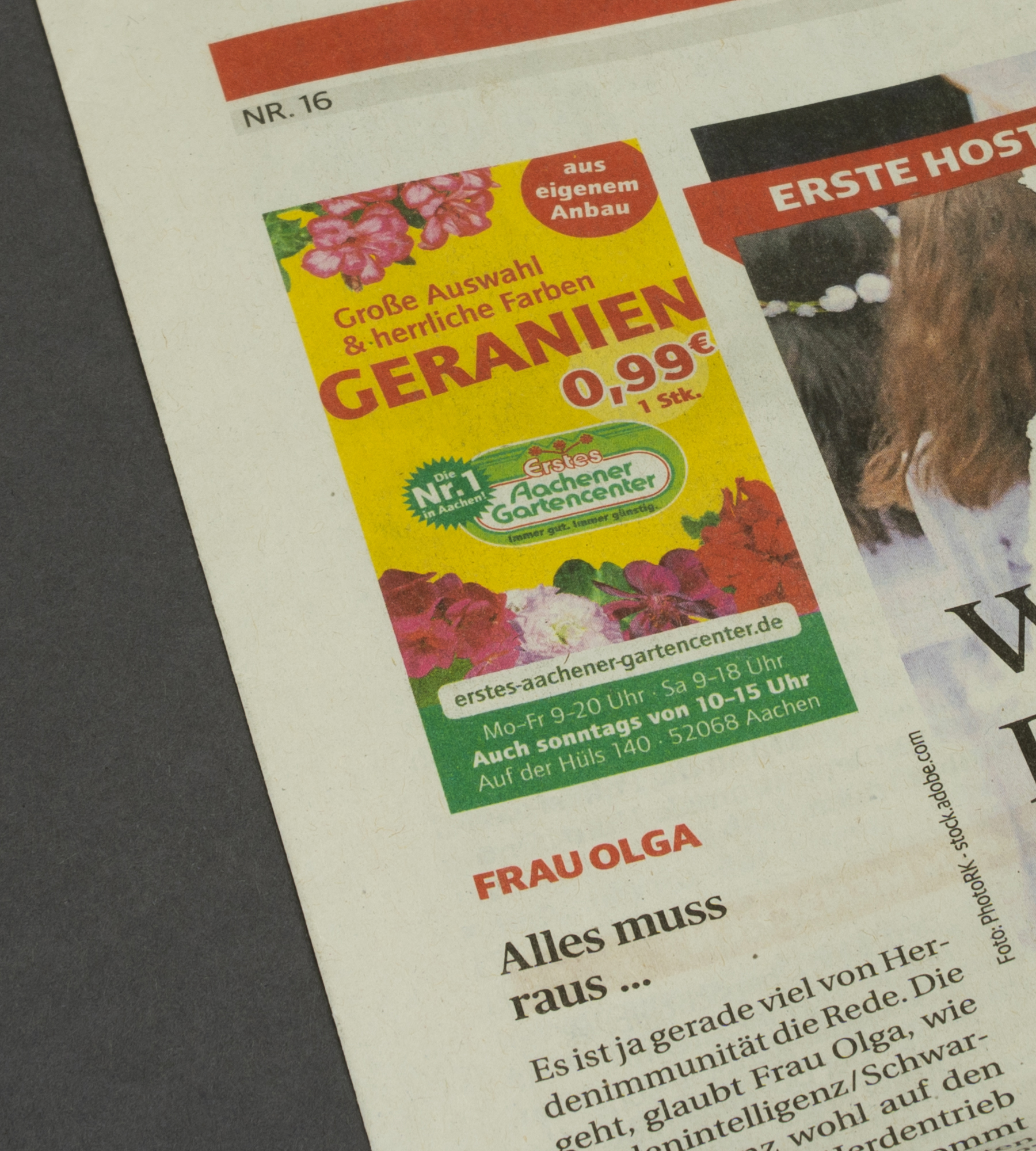 Geranien Anzeigengestaltung Erstes Aachener Gartencenter im Super Sonntag